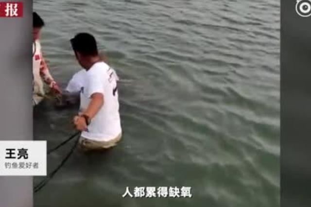 安徽男子水中肉搏150斤大鱼 3小时人鱼大战累倒仨壮汉