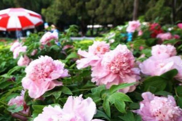 万花丛中过 独爱这一枝:各国国花选美都在这