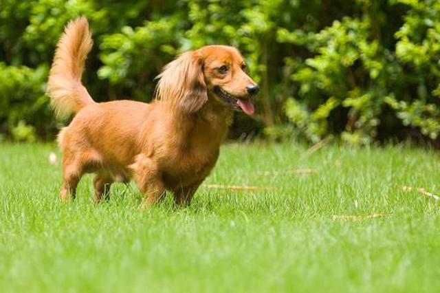 合肥每年涉犬类报警约万起