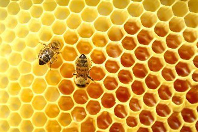 蜂蜜被检测兽药残留超标 肥西一超市被罚1.7万元