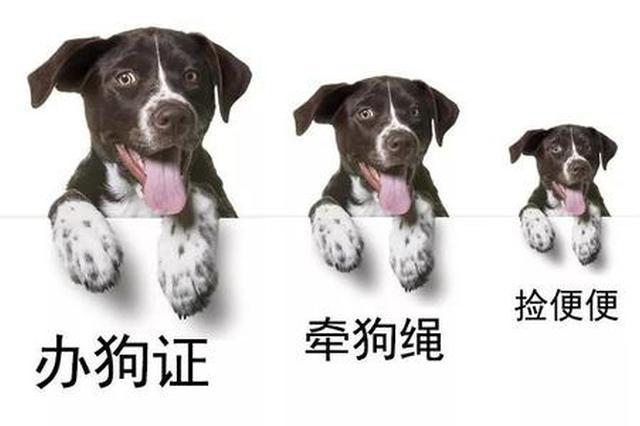7月26日 合肥市民可拨打12345发表文明养犬意见和建议
