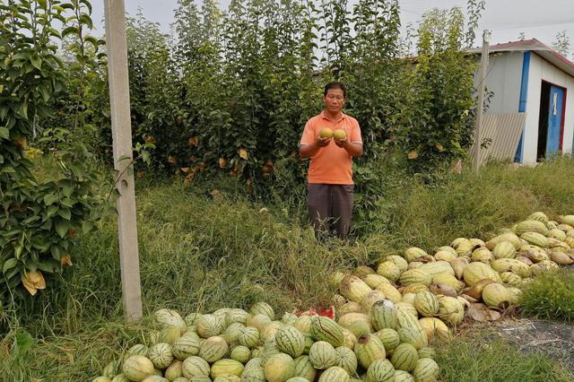 村民挖断路 梨园二三十万斤梨子运不出