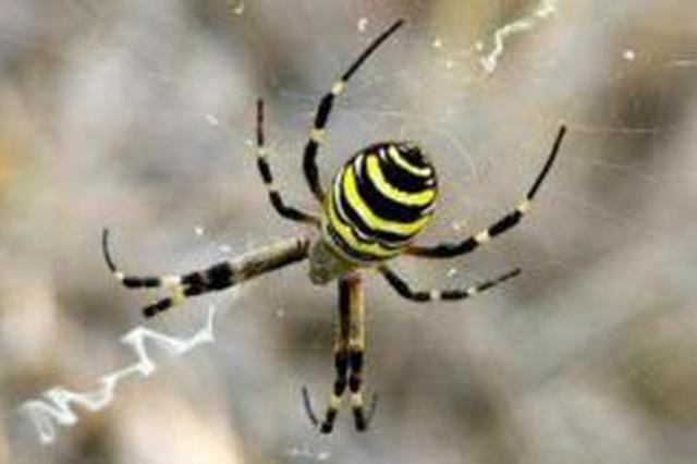 安庆农户家发现一神奇蜘蛛 蜘蛛网上出现英文字母