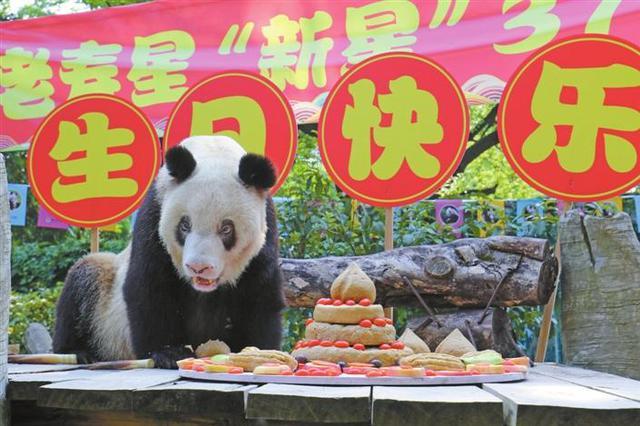 """""""百岁""""大熊猫庆生"""