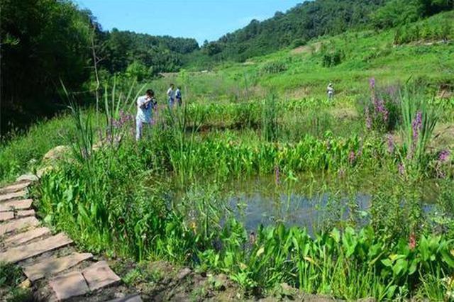 小微湿地扩容凸显城市环保理念升级