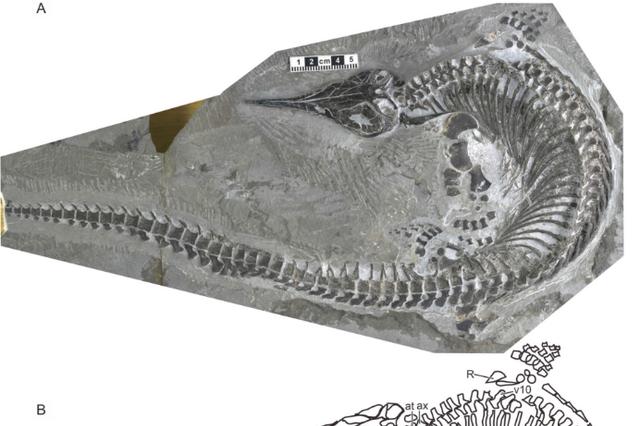 巢湖动物群发现鱼龙新物种