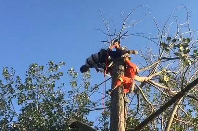 男子被压在10米高的树顶上 消防员巧解救援难题
