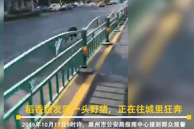 """""""二师兄""""进城一路狂奔 滁州警方一枪将其撂倒"""