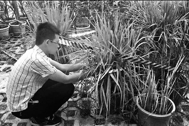 大二男生用5个月成功种出杂交水稻