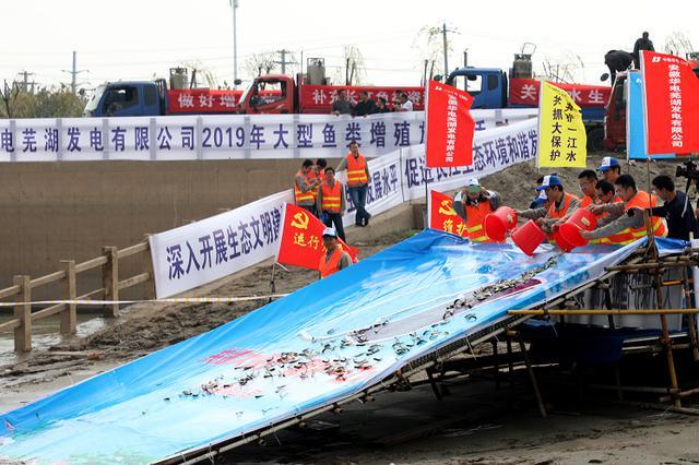 华电芜湖公司开展增殖放流 守护美丽长江