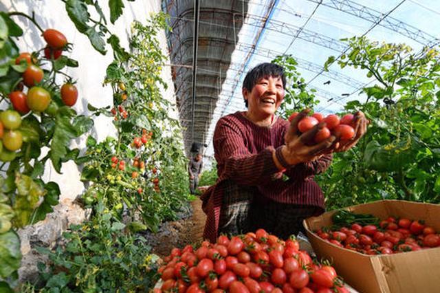 安徽:秋收大头落地  整体呈现丰收态势