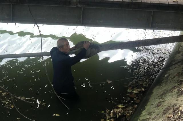 老人摔入河中淌水救人