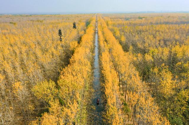 安徽合肥:滨湖国家森林公园落叶缤纷 秋意如画