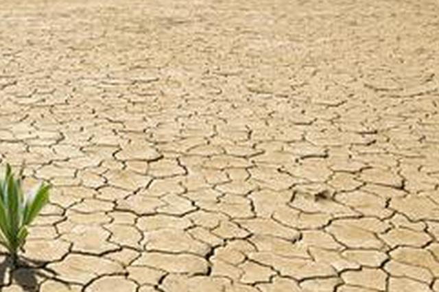 3个专家组分赴各地开展抗旱救灾技术指导和督导服务
