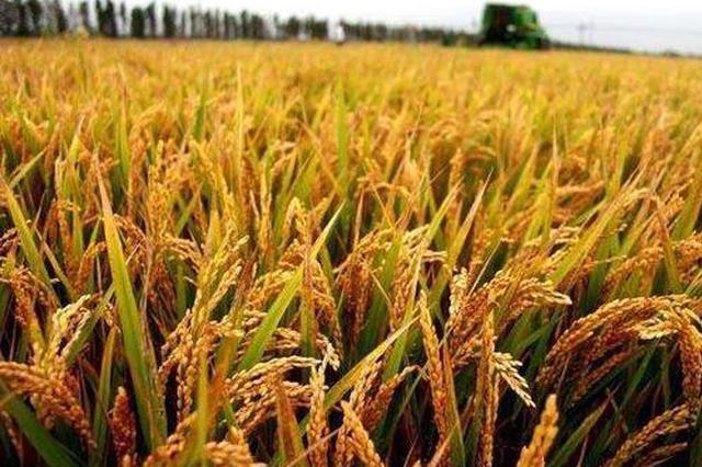 安徽水稻单产新纪录诞生