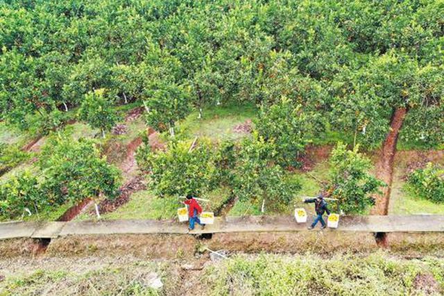 宣州区安莲村:扶贫基地 解决近百人就业