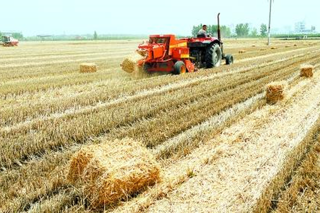 黄山市黄山区农作物秸秆综合利用率达91%