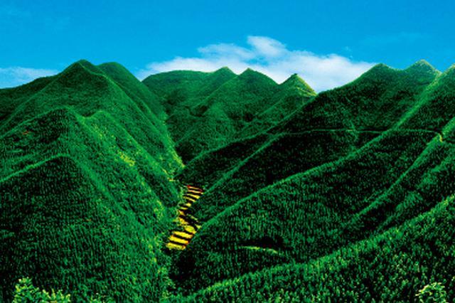 前三季度林业产业总产值超5万亿