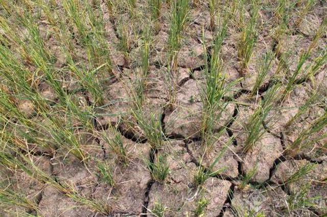 近期连续降雨使安徽绝大部分地区旱情解除
