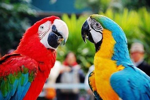 养宠物也需守法 收购鹦鹉可能涉嫌犯罪
