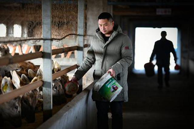 """淮南:梅花鹿变""""脱贫鹿"""" 特色养殖助农脱贫增收"""