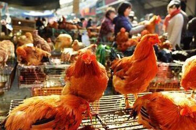 亳州市城乡132处活禽销售农贸市场全部关停