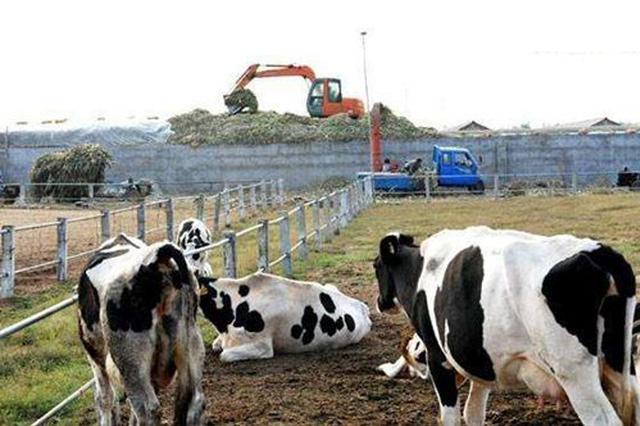 淮北畜禽养殖业逐步恢复生产