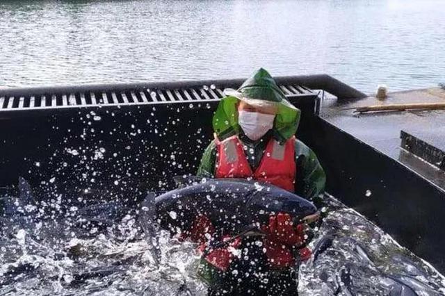 黄山市向武汉捐赠1.5万公斤有机活鱼
