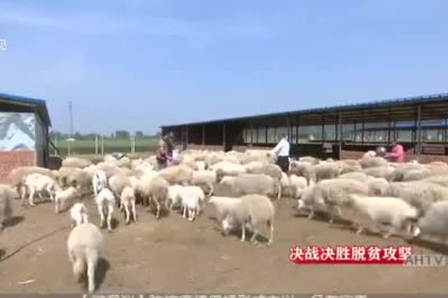 安徽:集中资源力量  打响脱贫攻坚春季攻势