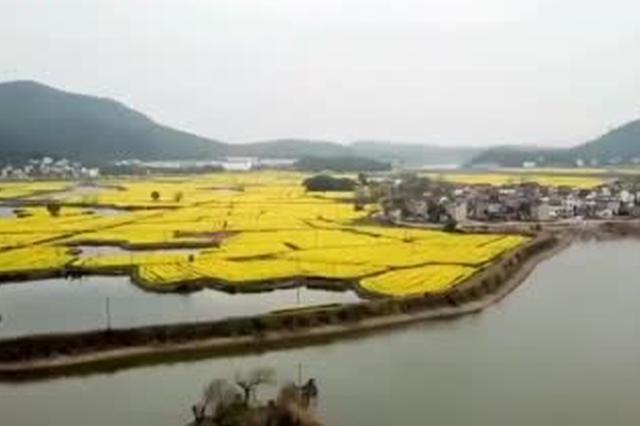 太美了 航拍安徽芜湖万亩油菜花海