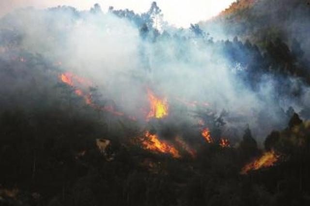 男子祭祖失火毁山林 触犯刑法被判刑