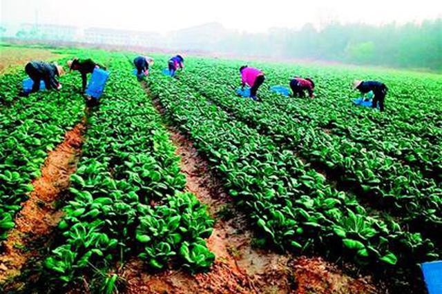 安徽今年农业特色产业 扶贫项目覆盖80%贫困户