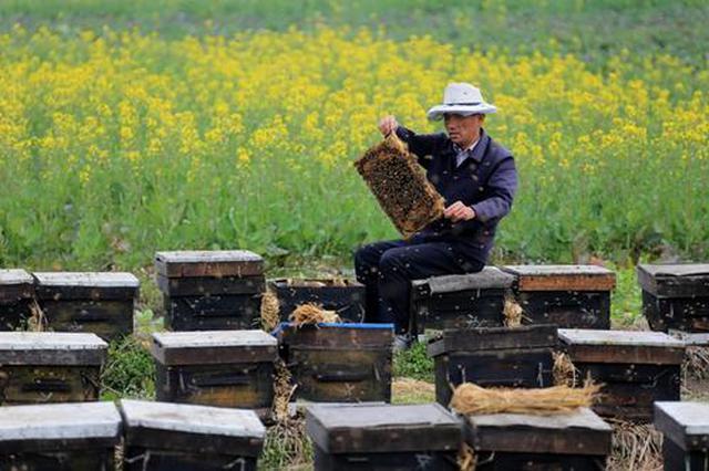 农业部门助力蜂农放蜂转场