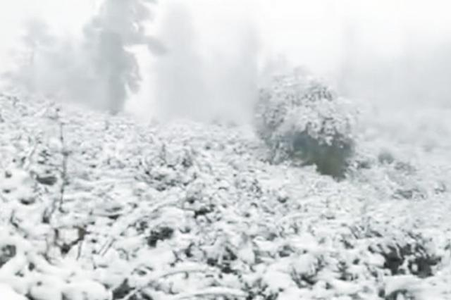 """这场""""倒春寒""""够厉害 芜湖竟然飘了雪"""