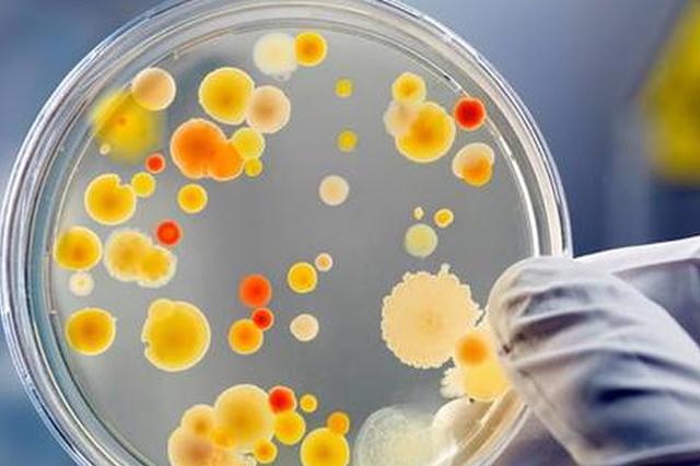 """自来水中有""""微生物"""" 可以放心喝吗"""