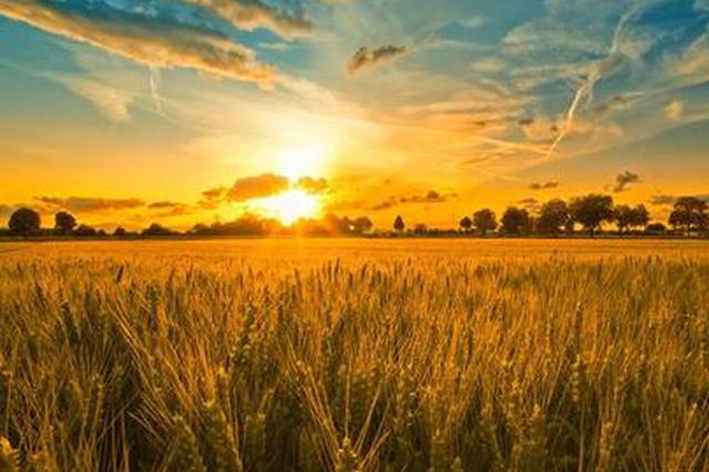 蚌埠:产粮大市不缺粮 粮食供给有保障