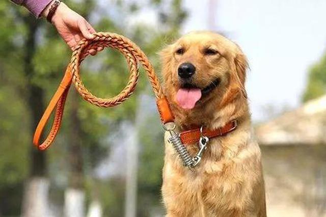 重磅 《合肥市养犬管理条例》公布