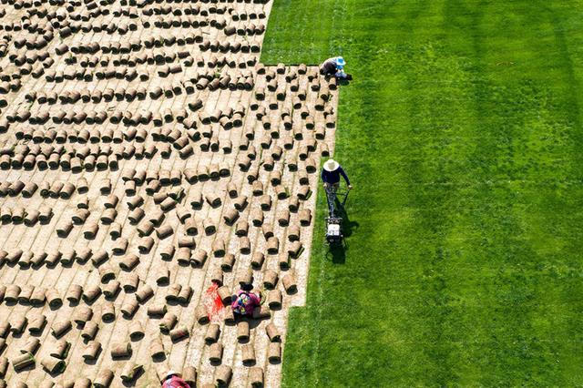 安徽五河:草坪铺通脱贫路