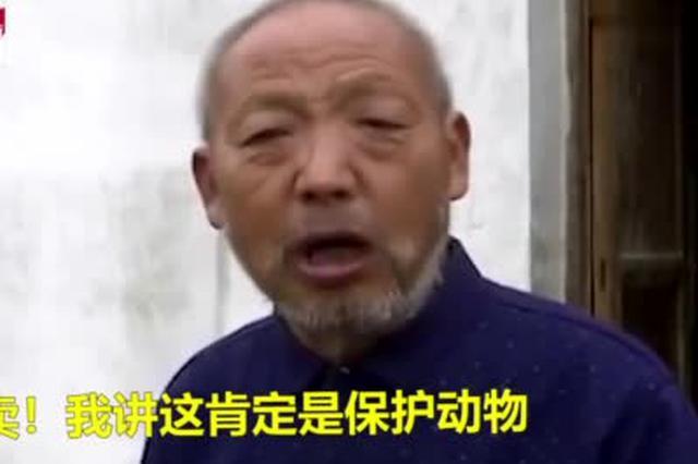 安徽村民河边接连捕获4腿娃娃鱼