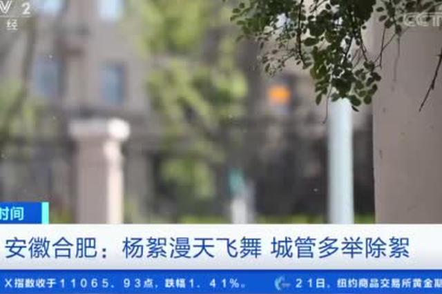 安徽合肥:杨絮漫天飞舞 城管多举除絮