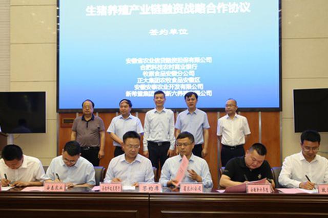 真金白银!安徽为生猪产业链担保贷款超1亿