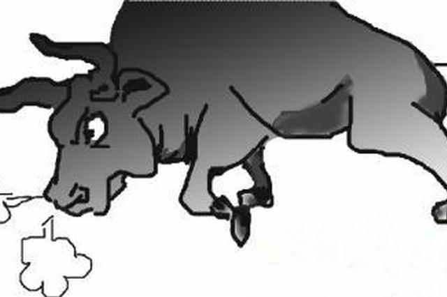 600斤疯牛攻击行人 狂奔10里 太和民警开枪处置