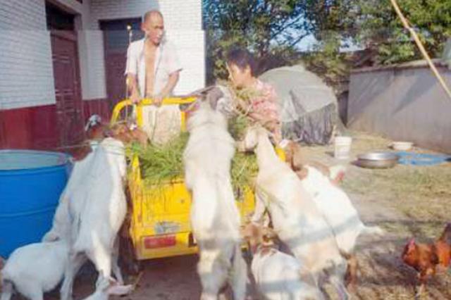 王克海:养殖山羊脱贫致富喜洋洋