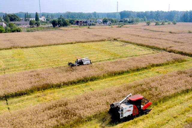 安徽肥东:机械化启动夏收环保模式