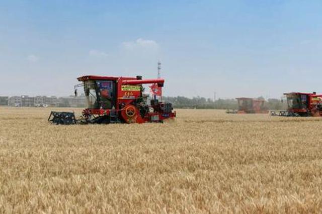819.85公斤 安徽省小麦单产再创新高