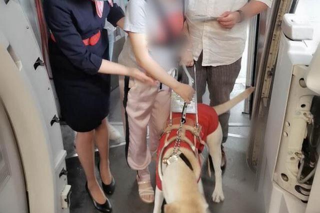 """合肥一航班迎""""贵客"""" 导盲犬爱微陪主人坐飞机"""