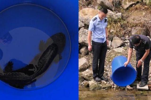 安徽村民沟里捞虾捞出野生娃娃鱼