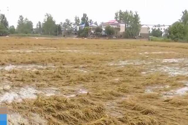 安徽六安:连日降雨 部分稻田绝收