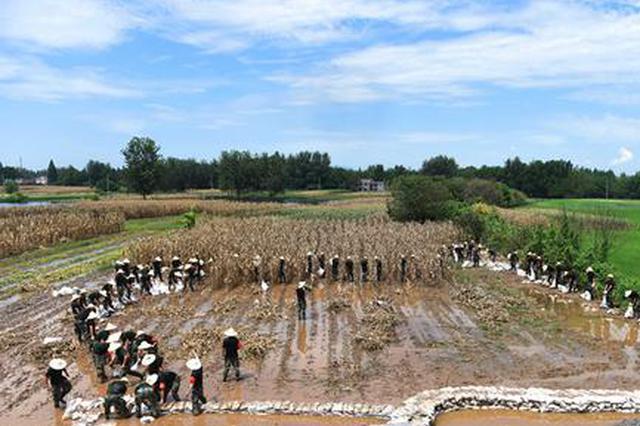 抗洪抢险 武警官兵还顺带帮老乡抢收了300多斤玉米