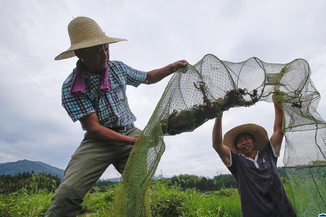 稻香虾肥 脱贫增收